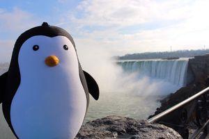 Le Pingouin aux Chutes du Niagara !!