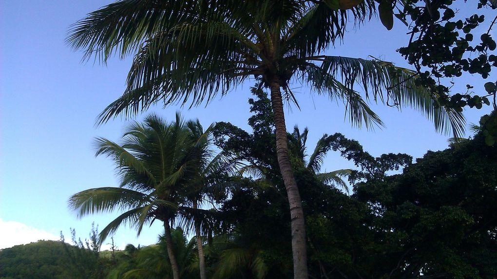 Guadeloupe Basse Terre : Port Louis, Anse du souffleur, Plage petite anse, Deshaies, Domaine de Valombreuse, Pointe Allègre