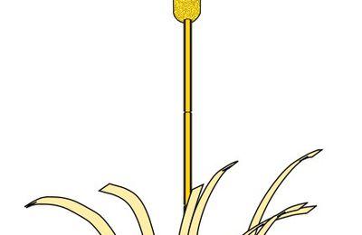 Symbole du roseau dans la Bible