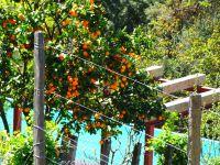 Les arbres apportent de la couleur