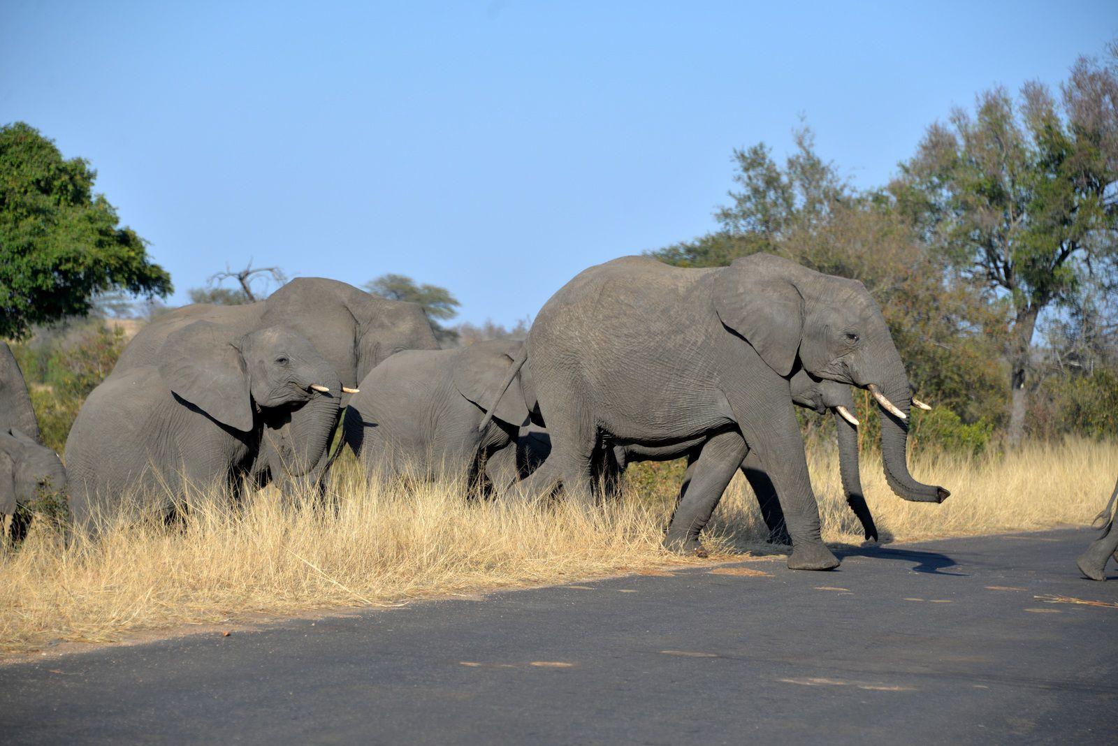 Afrique du Sud / 6 / il est 08h53, nous sommes le 15 Novembre 2020