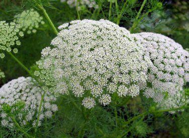 Allergie de printemps : on dit STOP avec les huiles essentielles