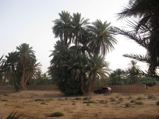 Quittons le complexe thermal délabré d'Abaynou pour rejoindre la ville de Guelmin, carrefour de routes caravanières  à la porte du désert. Là, nous faisons provisions pour plusieurs jours, car nous allons avancer sur la route des caravanes  et l'approvisionnement ne sera pas possible. Nous rejoignons ensuite l'oasis de Tighmart où vivent 800 familles.  En fin d'après midi, après les fortes chaleurs, un guide nous fera découvrir la palmeraie, la kasbah-caravansérail de Jamil LAAB, l'épicerie et l'artisanat local