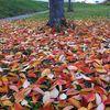 Swap à la faveur de l'automne....