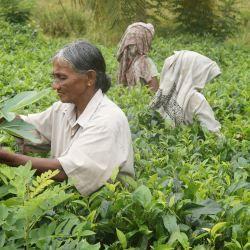 Sri Lanka: de l'idéologie chimiophobe et «bio» à l'urgence alimentaire