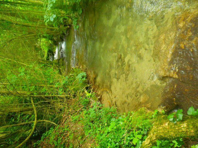 Dans la fraicheur des cours d'eau des montagnes.