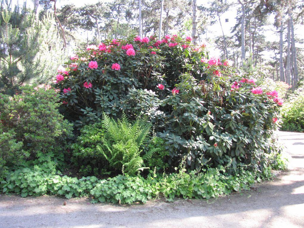 Parc floral de Vincennes le 23 mai 2010, les rhododendrons sont en fleur ...