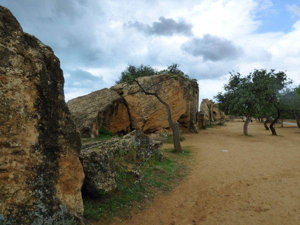 les nécropoles et les oliviers