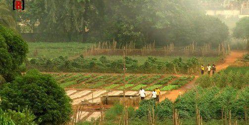 Fermes agricoles : une réussite nommée Songhaï...