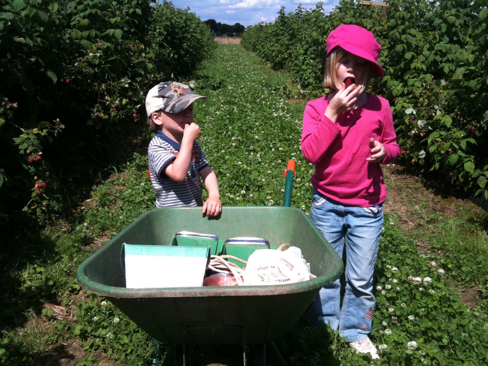 J'ai un super souvenir de la première fois où je suis allée à cette ferme cueillette, en juillet 2012, avec mes enfants qui étaient alors encore petits !