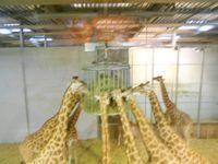 Le Zoo de Vincennes