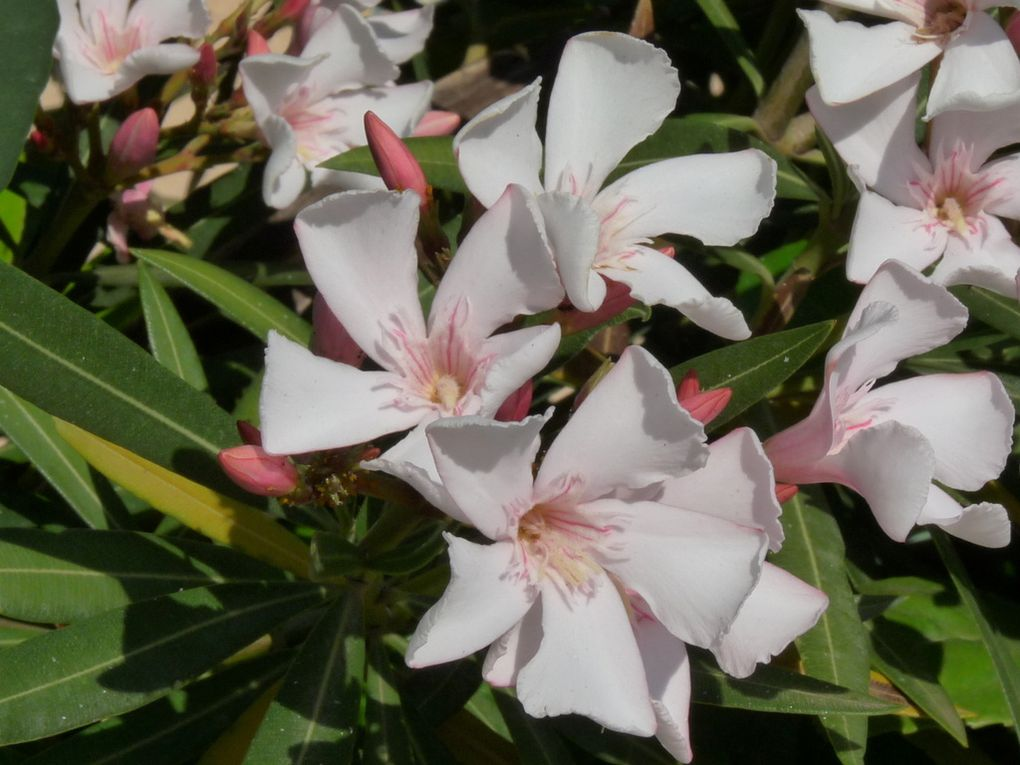 Fleurs 135