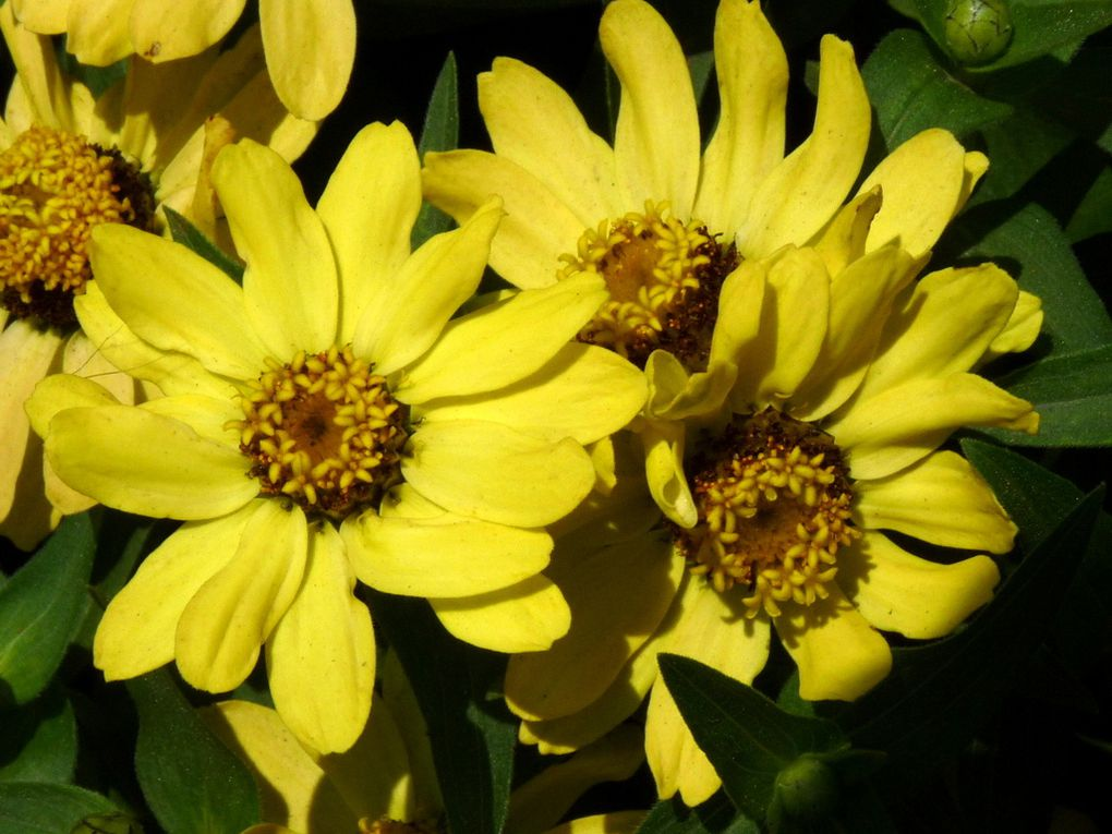 Fleurs 126