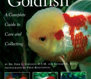 Free ebook download textbooks Fancy Goldfish:
