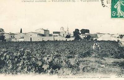 Valergues et son patrimoine (5) une riche économie viticole