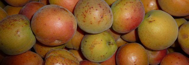 Abricots au naturel (ou presque !)