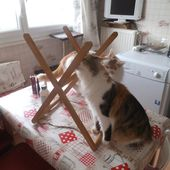 chats sentaient quoi? - crea.vlgomez.photographe et bricoleuse touche à tout.over-blog.com