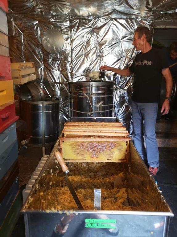 La Mure-Argens: L'or des abeilles coule à Argens