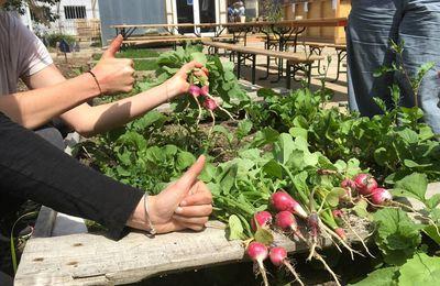 Les radis sont ready !
