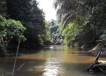 Strengthening forest ecosystem connectivity in the Taï-Grebo-Sapo region in Côte d'Ivoire and Liberia