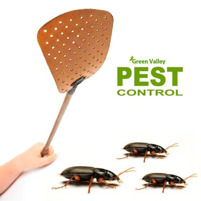 DIY pest control in Vancouver – Will it cost more?