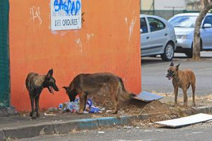 Une mesure pour lutter contre l'errance animale à La Réunion