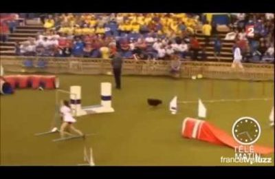"Agility World Championship 2014  à TELE-MATIN(A2) & ""LIVING FOR AGILITY""  en LIVE"