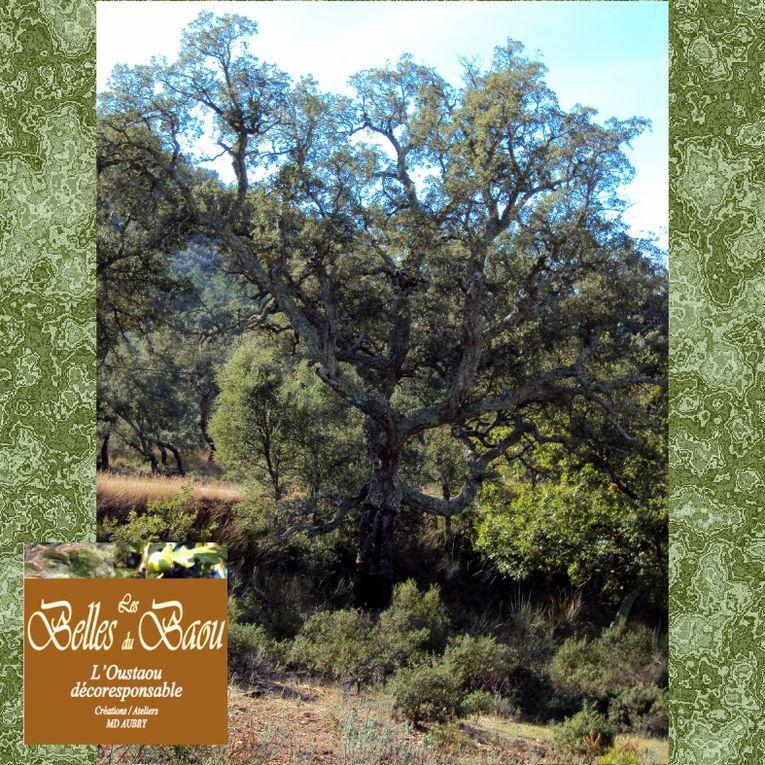 Le Chêne liège - recours aux ressources symboliques de la nature