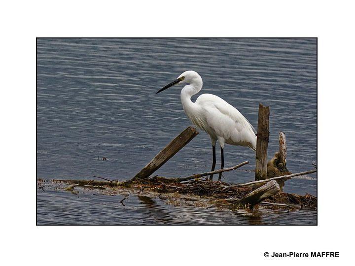 Quelques oiseaux du littoral dans leur univers loin des hommes.