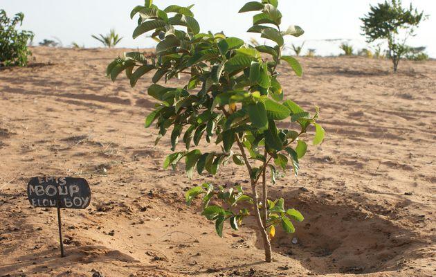 Sénégal : Des paysans font le procès de...
