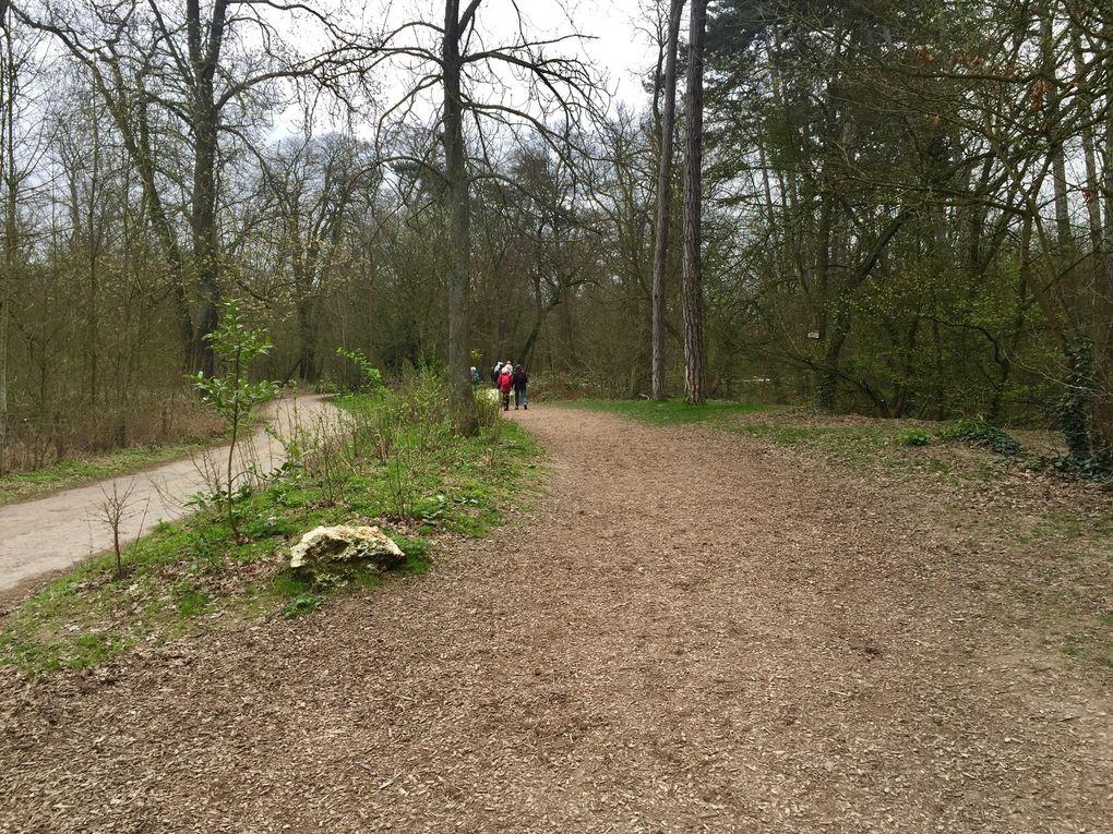 Marche Nordique au Bois de Vincennes - 8,3 km.