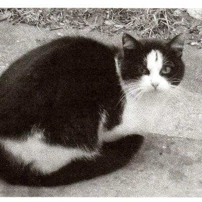 SOS pour une famille de chats ! URGENT.