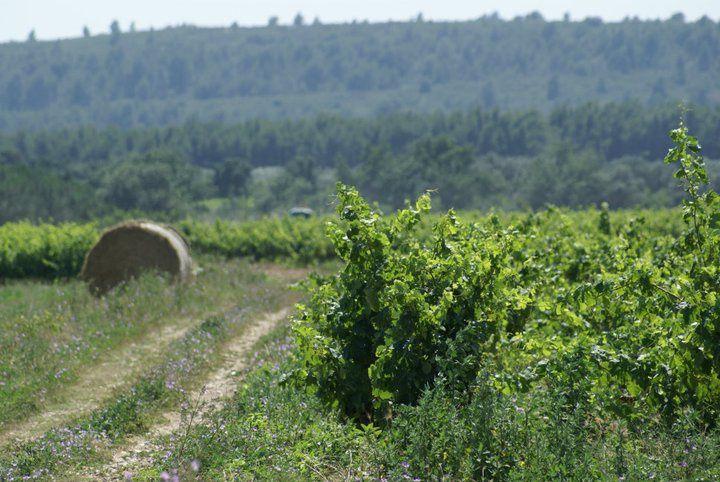 Le vin doux de Joan Fabra distingué par Josep Roca! interview par Nicolas Caudeville