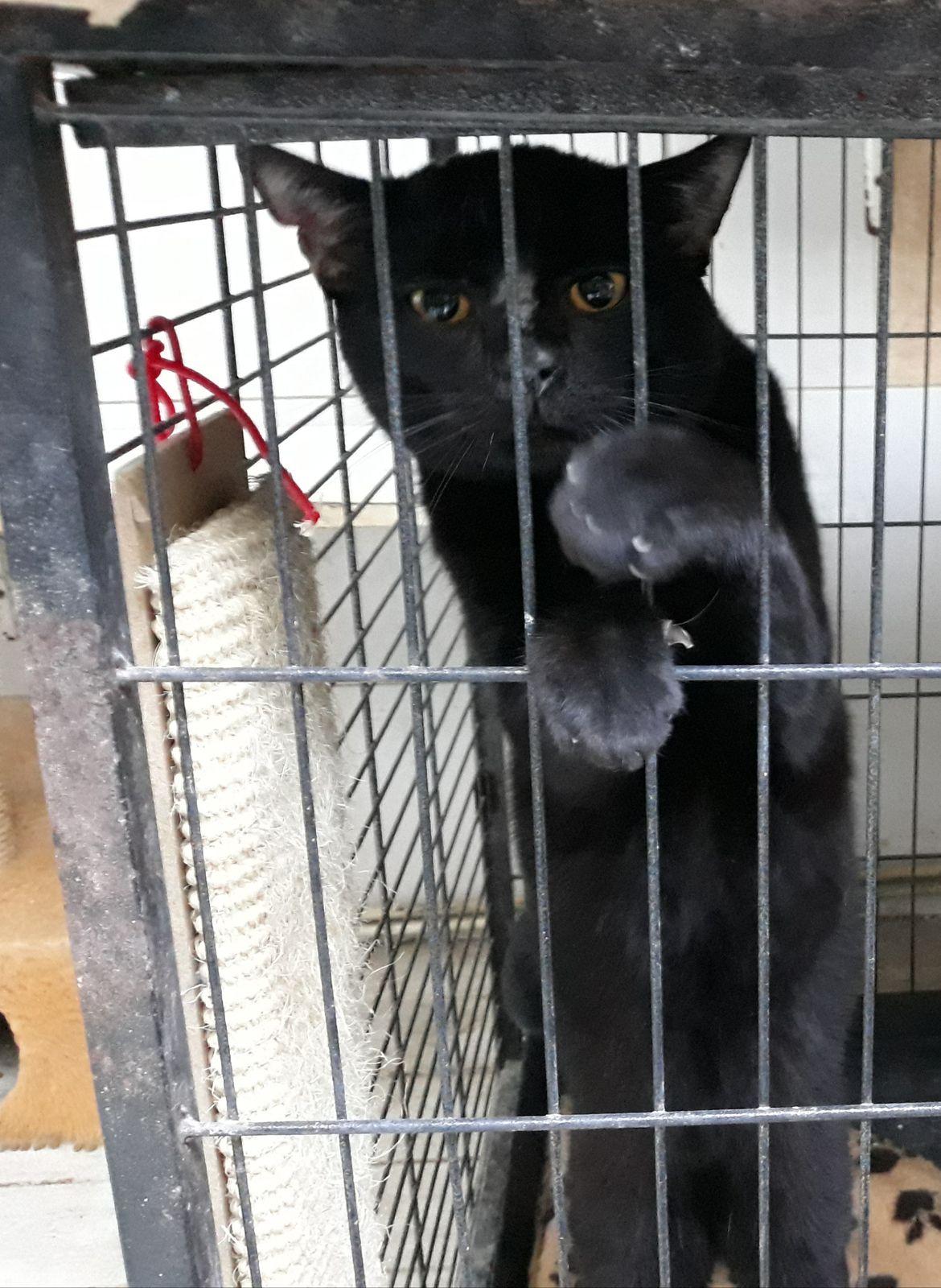 Il est adopté !!! HYPO, très gentil mâle castré d'environ 2 ans