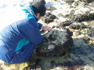 Nathalie a été la première a nous rejoindre sur le site du plateau de Kerpape. Pendant que Pierre choisissait avec délicatesse quelques animaux pour confectionner un aquarium éphémère, Nathalie identifiait les différentes algues...