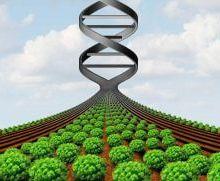 Des chercheurs explorent une nouvelle approche pour ajouter de la diversité aux espèces cultivées