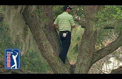Dropar la bola que reposa en la base de un árbol