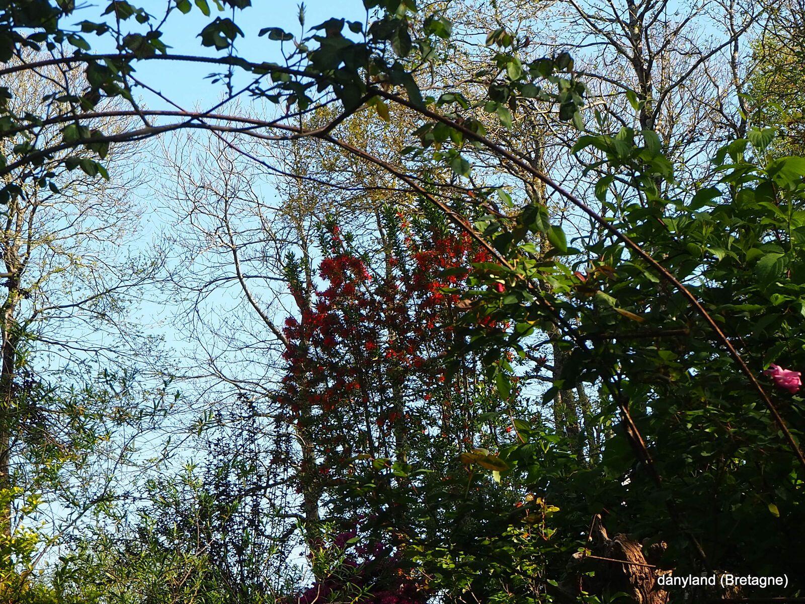 le jardin de danyland le 25 avril 21