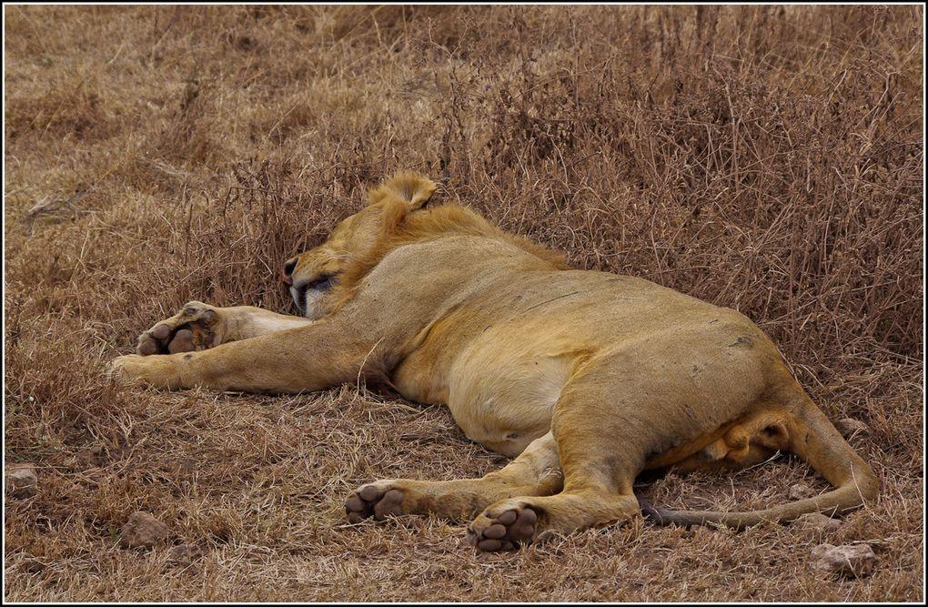 Album - Le Cratere du Ngorongoro