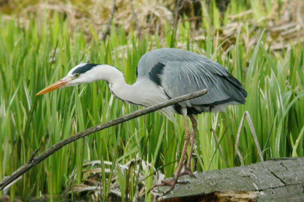 Les oiseaux du Djurdjura, sédentaires et migrateurs.