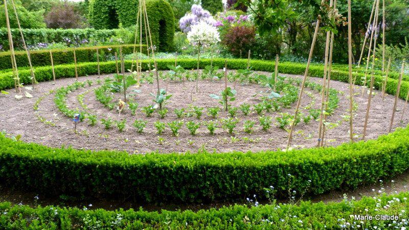 Des cercles de buis et de semis