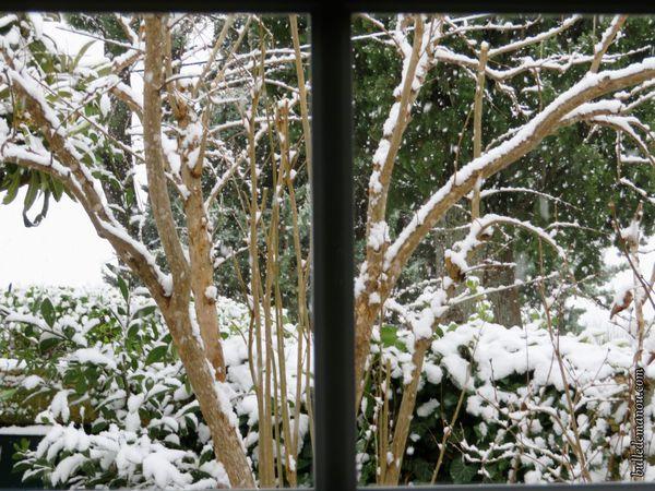 Quelques vues de mon jardin...
