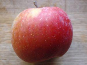 Canard farci aux pommes et Calvados