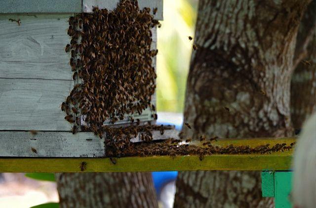 Du feu et des abeilles