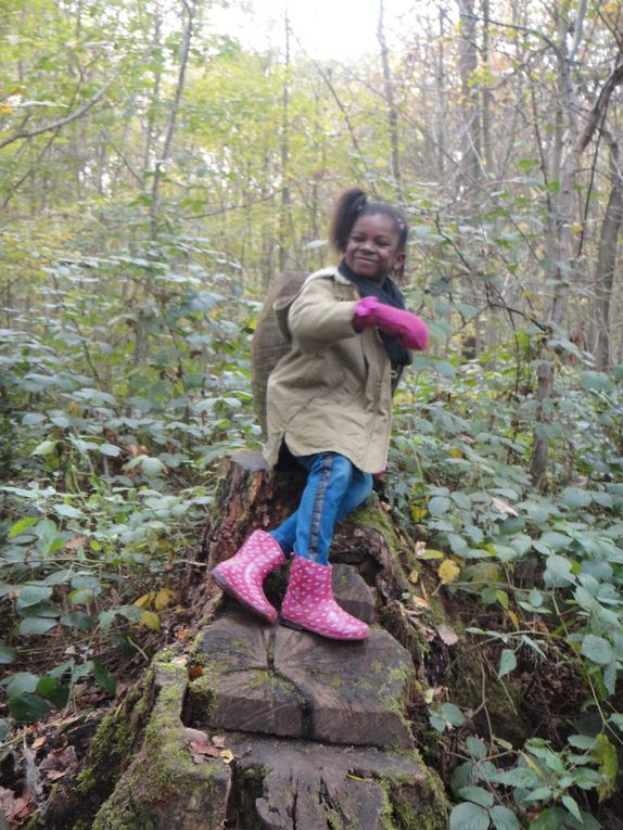 Les CPB en forêt à la découverte des arbres