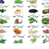 Natura Plantes® Préventif - Cabinet Chrysalide