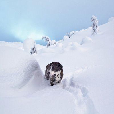 Canada - Celui qui raquettait à la White Pass