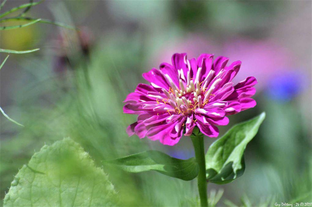 Jachère fleurie et autres fleurs