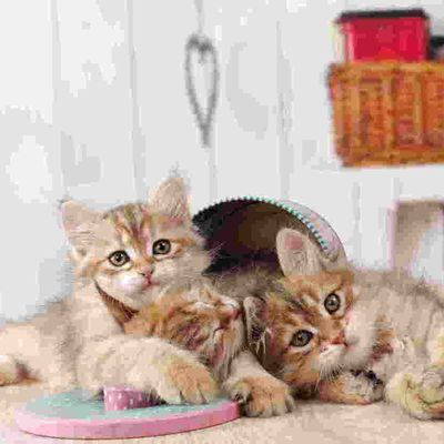Les chatons de Ianouchka et de Jinodzo