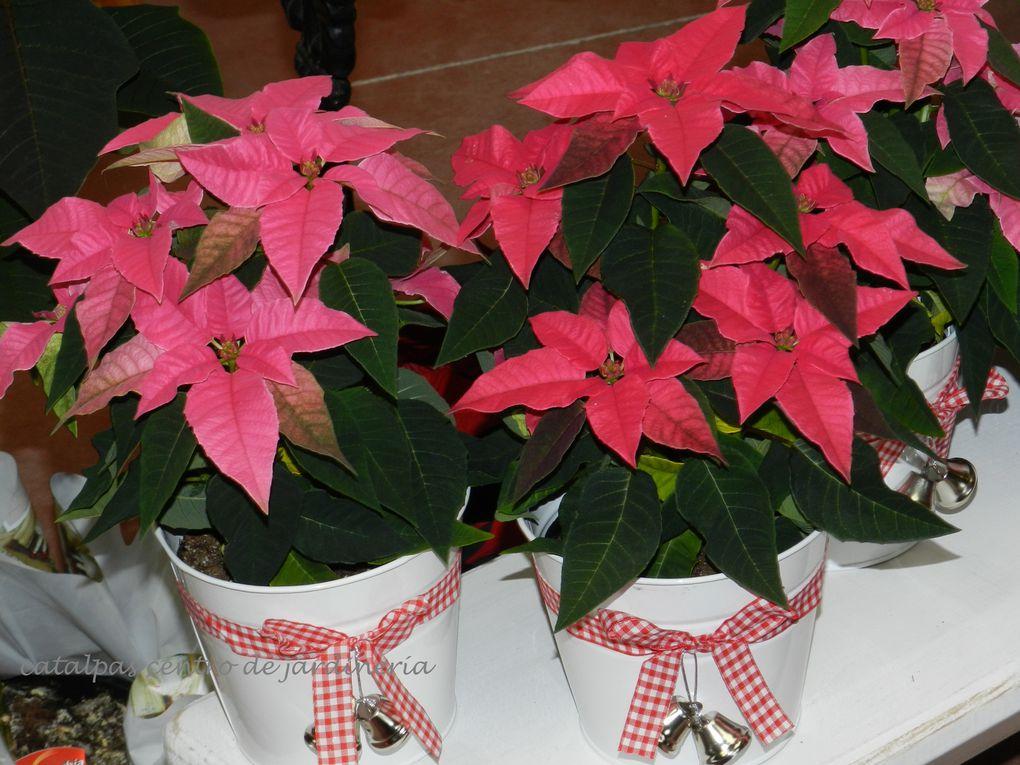 Todas las novedades de Navidad 2011